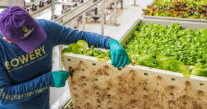 Hydroponic Farming Roots of Plants