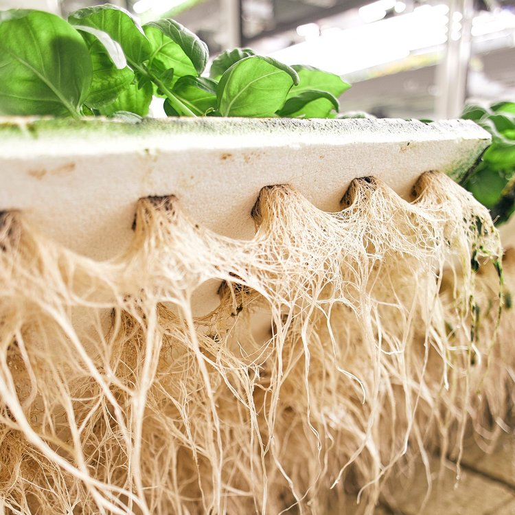 The Roots of Indoor Farming3