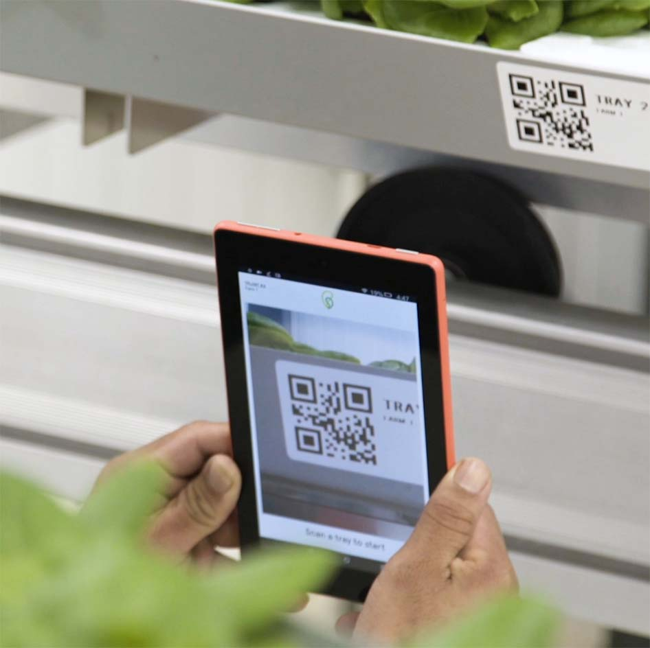 Man Scanning a Tray of Lettuce at Bowery Farming