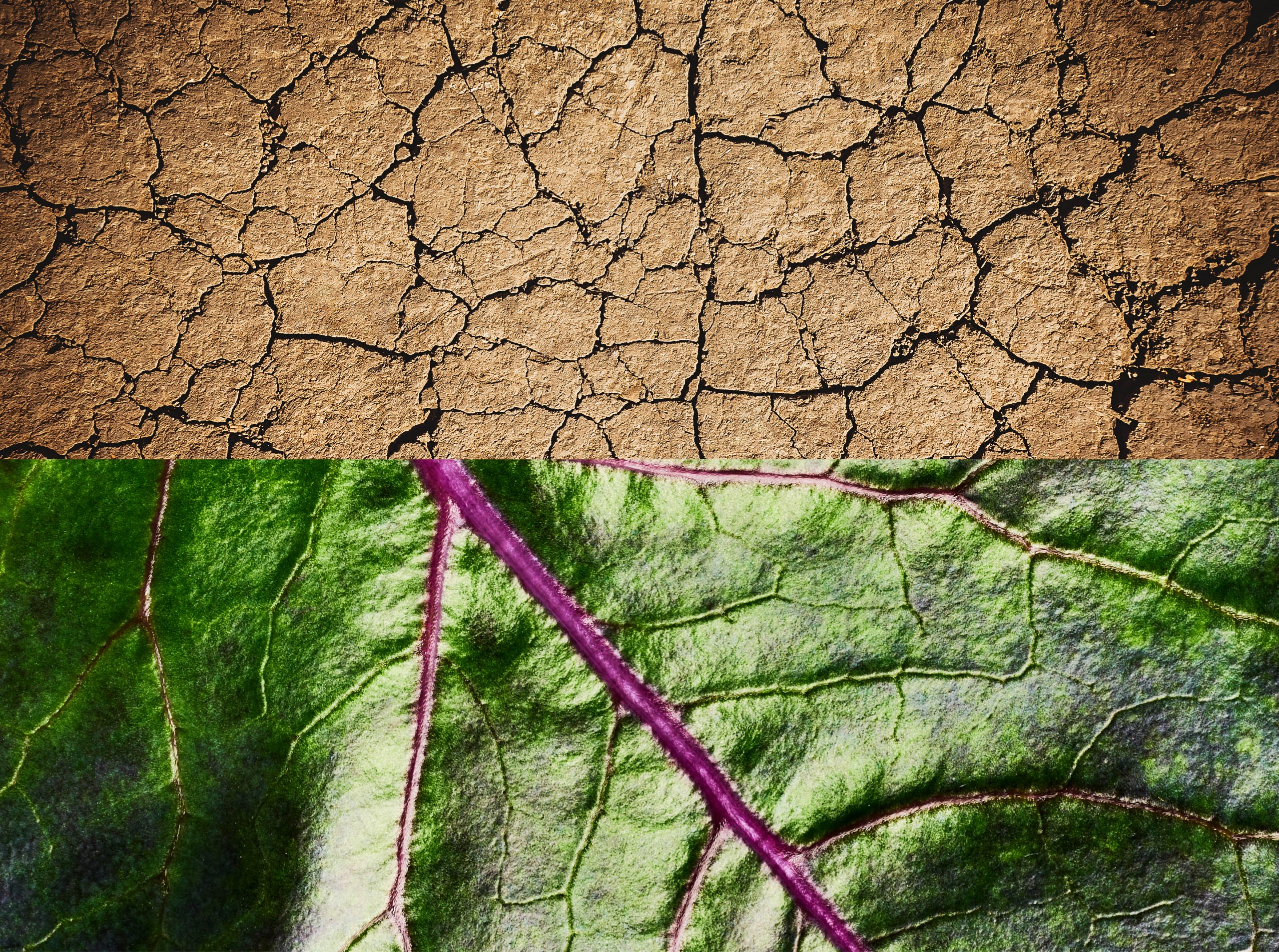 CRACKED EARTH AND MICRO LEAF SHOT