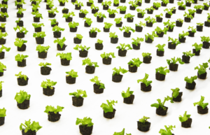 Germinated Seedlings ready for Growth